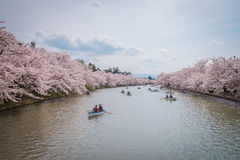 Fleurs de cerisier au printemps au château de Hirosaki, préfecture d'Aomori, J Photo libre de droits