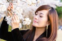 Femme dans les fleurs de cerisier photo stock