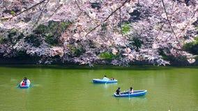 Fleurs de cerisier chez Chidorigafuchi à TOKYO JAPON images stock