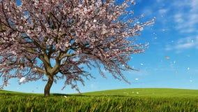 Fleurs de cerisier dans l'animation de la pleine floraison 3D illustration libre de droits