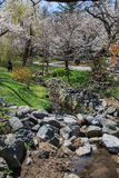 Fleurs de cerisier dans la DM de Kenwood Images libres de droits