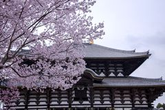 Fleurs de cerisier dans la perspective du temple bouddhiste antique Todai-JI Image libre de droits