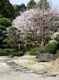 Fleurs de cerisier dans le jardin japonais photos stock