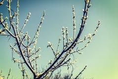 Fleurs de cerisier dans le rétro style photos libres de droits
