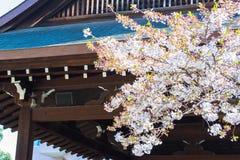 Fleurs de cerisier dans le tombeau de Yasukuni photographie stock libre de droits