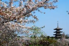 Fleurs de cerisier de floraison Photo libre de droits