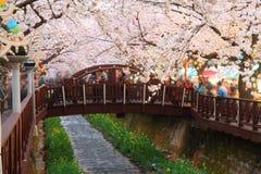 Fleurs de cerisier de Jinhae photo stock