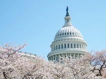 Fleurs de cerisier de Washington devant dôme en avril 2010 Photographie stock libre de droits