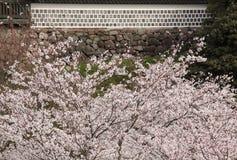Fleurs de cerisier devant le mur japonais de château Photo stock