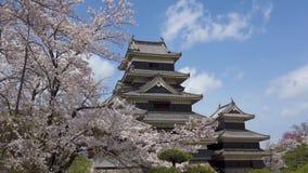 Fleurs de cerisier du Japon - de Matsumoto - de château de Matsumoto banque de vidéos