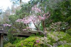 Fleurs de cerisier en mars image stock