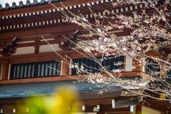 Fleurs de cerisier en mars, branche de Sakura au-dessus de fond de temple de Zojoji, Tokyo, Japon le 31 mars 2017 Photos libres de droits