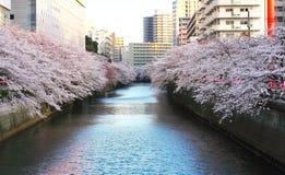 Fleurs de cerisier en rivière Tokyo Japon de Meruro Images libres de droits