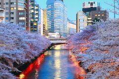 Fleurs de cerisier en rivière Tokyo Japon de Meruro Photos stock