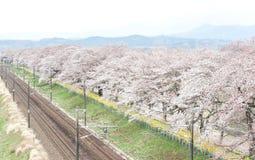 Fleurs de cerisier et chemins de fer dans des cerisiers de Hitome Senbonzakurathousand à vue à la rive de Shiroishi vue de Shibat Image stock