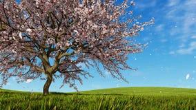 Fleurs de cerisier et pétales en baisse à la journée de printemps illustration de vecteur