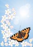 Fleurs de cerisier et papillons illustration stock