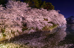 Fleurs de cerisier et parc de Hirosaki Photos libres de droits
