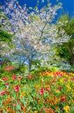 Arbre de fleurs de cerisier photographie stock libre de droits