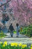 Fleurs de cerisier ? Fukushima, Japon image stock