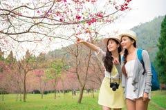 Fleurs de cerisier guidées de filles asiatiques Photographie stock libre de droits
