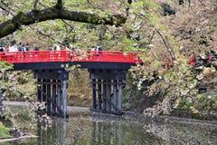 Fleurs de cerisier de Hirosaki Photo stock