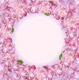 Fleurs de cerisier japonaises Photo libre de droits