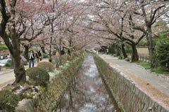Fleurs de cerisier de la promenade du philosophe Photographie stock libre de droits