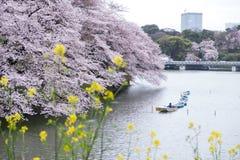 Fleurs de cerisier, nanohana jaune et bateaux de palette au fossé de Chidorigafuchi, Chiyoda, Tokyo, Japon Foyer sélectif photos stock