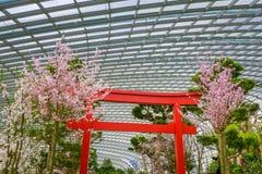 Fleurs de cerisier de ressort aux jardins par la baie photos stock