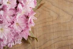 Fleurs de cerisier roses de Kwanzan sur un fond en bois avec l'espace de copie Image libre de droits