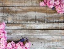Fleurs de cerisier rouges avec la jacinthe de raisin deux sur le bois à encadrer image libre de droits