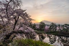 Fleurs de cerisier, Sakura en Japonais, et montagne d'Iwaki de bâti en égalisant la lumière au Japon photo stock