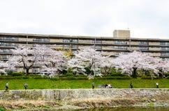 Fleurs de cerisier sur la banque le long de la rivière de Takano, Kyoto, Japon Photographie stock