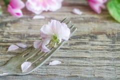 Fleurs de cerisier sur le concept de nourriture de fourchette Photographie stock libre de droits
