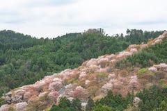 Fleurs de cerisier sur Yoshinoyama, paysage de ressort de Nara, Japon Images stock