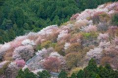 Fleurs de cerisier sur Yoshinoyama, paysage de ressort de Nara, Japon Photos libres de droits