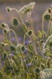 Fleurs de champ à l'aube Photos libres de droits
