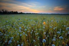 Fleurs de champ image libre de droits