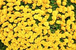 Fleurs de champ Images stock