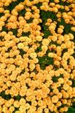 Fleurs de champ Photos stock