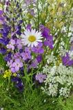 Fleurs de champ Photo libre de droits