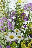 Fleurs de champ Photo stock