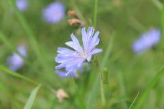 Fleurs de champ Image stock