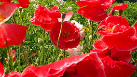 Fleurs de champ et de jardin Image stock