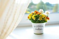 Fleurs de chrysanthème dans un pot en céramique Images libres de droits