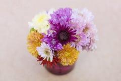 Fleurs de chrysanthèmes dans le vase en verre pourpre Photos stock