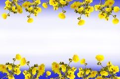 Fleurs de chrysantha de Tabebuia de vue Image stock
