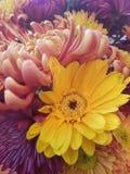 Fleurs de chute Images stock