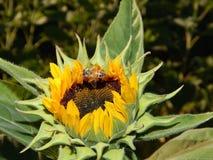 Fleurs de chute Photo libre de droits